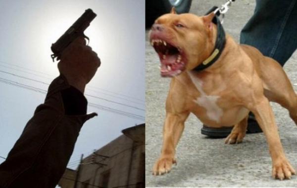 أشبه بالأفلام...مجرم مسلح يهدد المواطنين ويحرض كلبا شرسا على رجال الأمن ورصاص الشرطة يجنبهم الأسوء