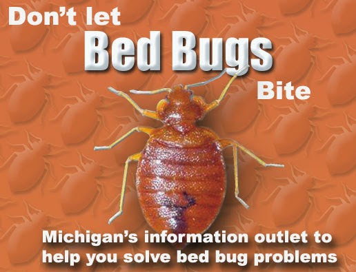 Bed Insect Removal - Eliminate Bedbugs From Your Home