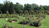 Rose garden overview, Elizabeth Park - West Hartford, CT