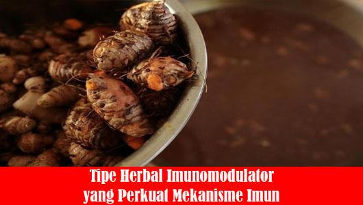 Tipe Herbal Imunomodulator yang Perkuat Mekanisme Imun