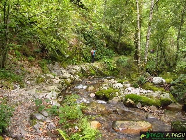 Camino y río Muniellos