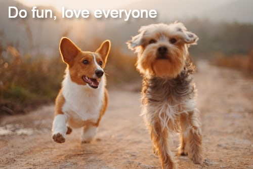 Unique Funny Dog Quotes for dog lovers for Instagram Isha Mysty