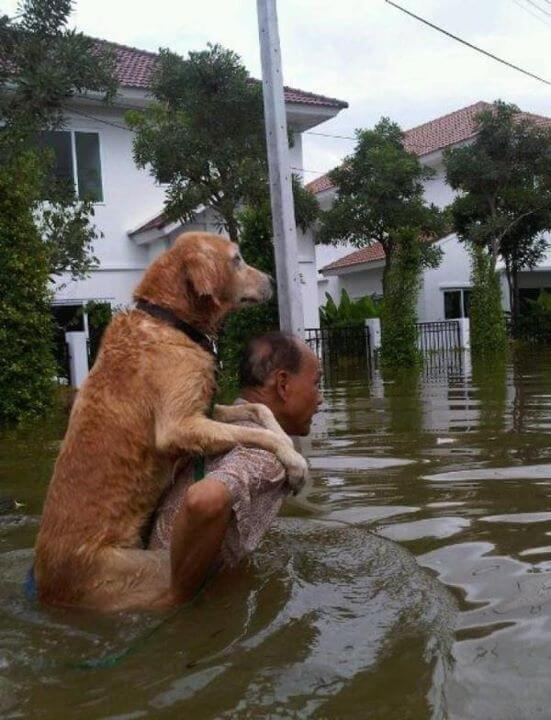 12 Powerful Images That Prove There's Still Kindness In The World - During a flood in Thailand, a brave man is saving his dog.