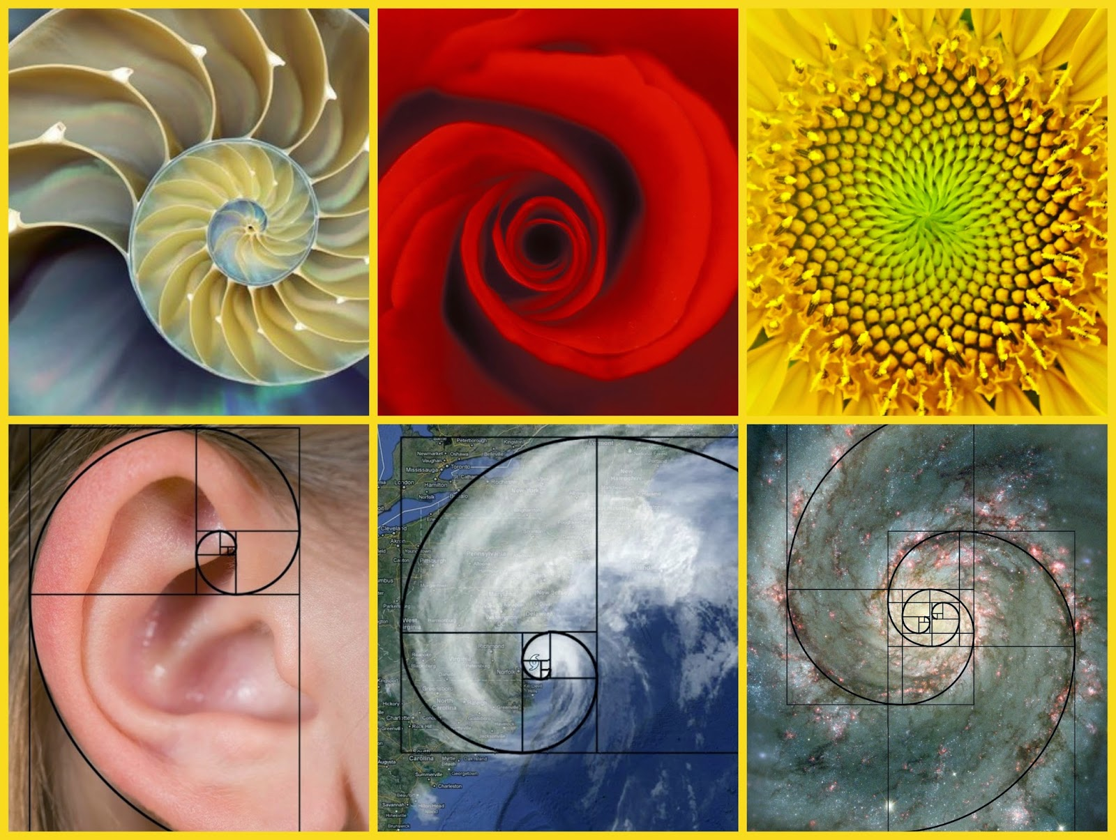Fibonacci Sequence In Art All Things Scie...