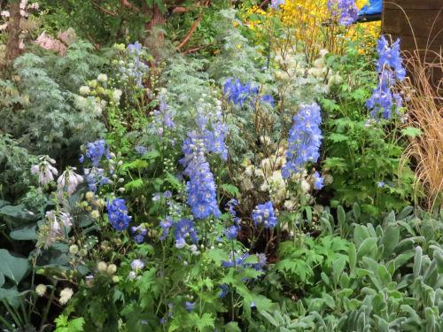 Philadelphia Flower Show 2019 - blue