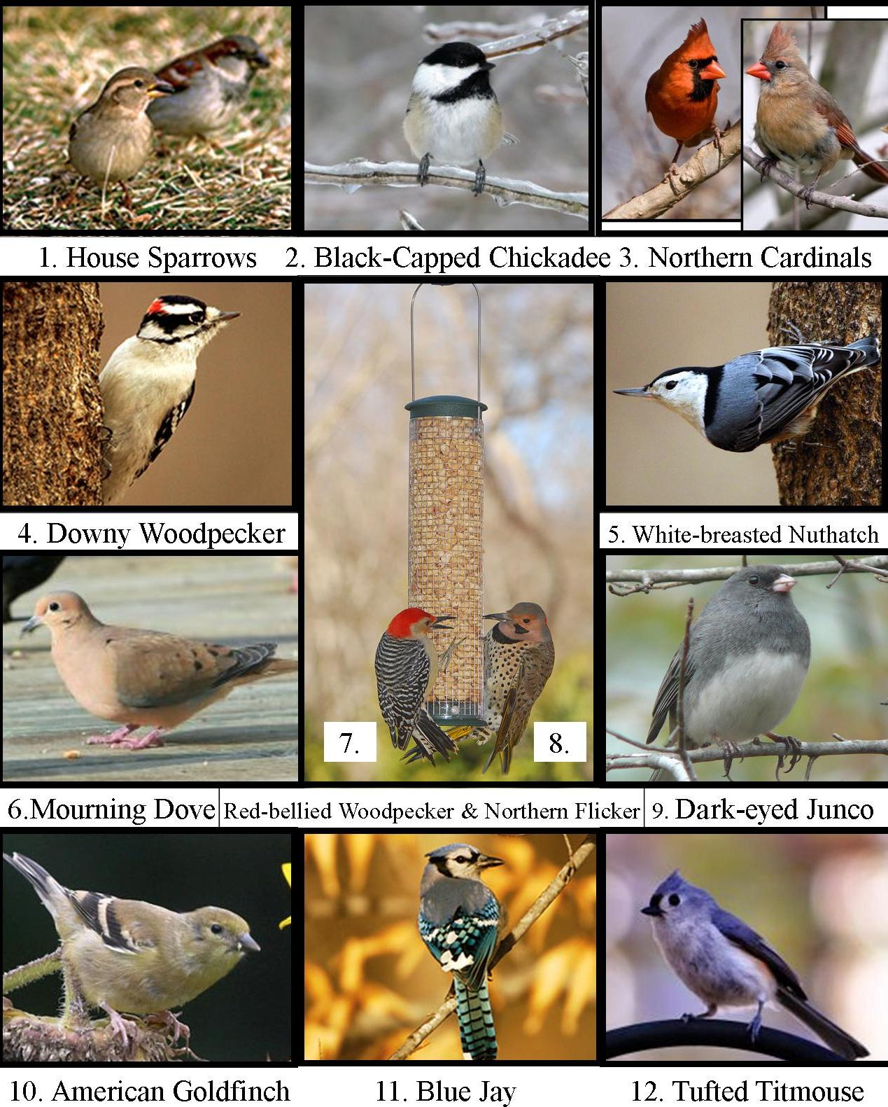 Wild Birds Unlimited: What Bird Is Singing Outside My