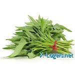 Sayur Kangkung Segar (Harga Per Ikat)