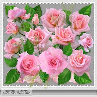 Rosa bonita psd Clip art