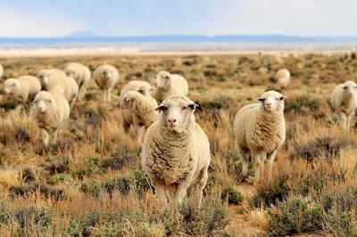 Investors often engage in herd mentality.
