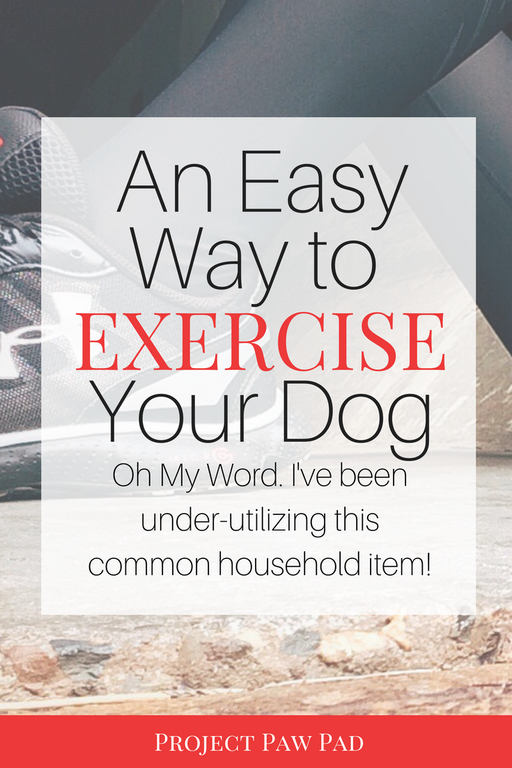 How To Train Your Dog To Use A Treadmill