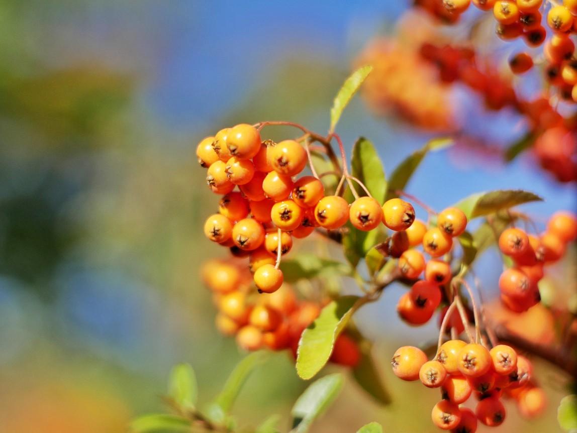 Herbstbeeren