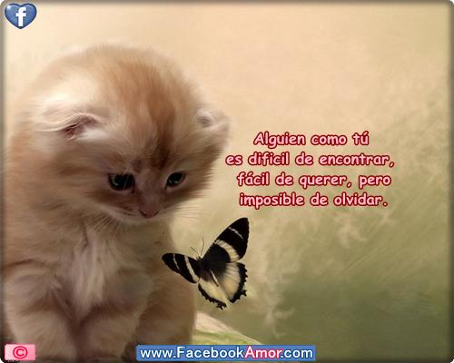 Imagens Linda Com Frases: Fotos Bonitas De Animales