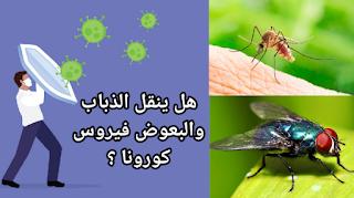 هل ينقل البعوض و الذباب فيروس كورونا؟ (أخر ما اثبته العلم) || ?How mosquitoes and flies transmit the Corona virus, the latest proven science