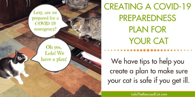 covid-19 preparedness plan for your cat
