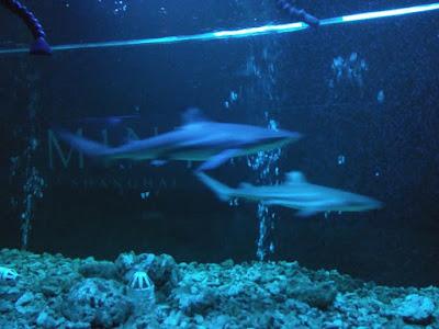 tiburones m1nt club shanghai