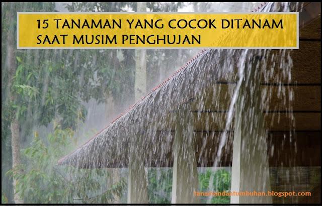 Tanaman yang Cocok Ditanam saat Musim Hujan