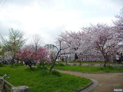 ソメイヨシノと桃