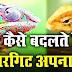 गिरगिट रंग क्यों और कैसे बदलता है - How Do Chameleons Change Color
