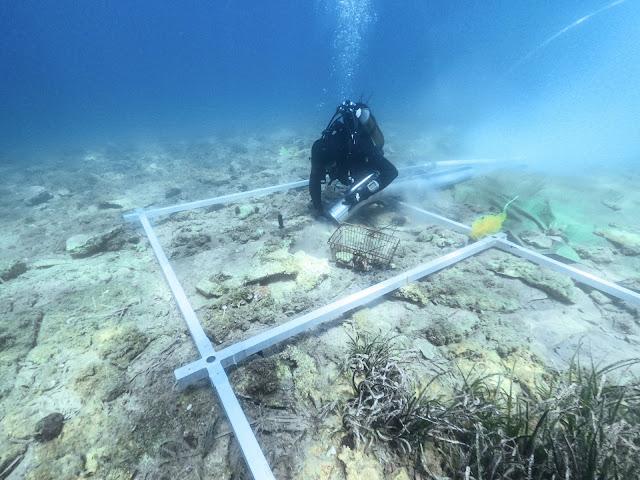 6,000 year-old island settlement off Croatian coast