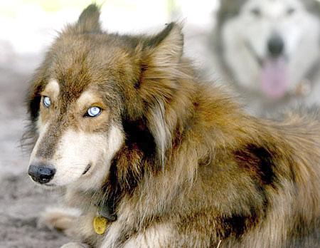 Wolves Deutsch