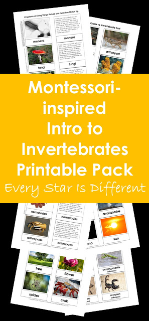 Montessori-inspired Intro to Invertebrates Printable Pack