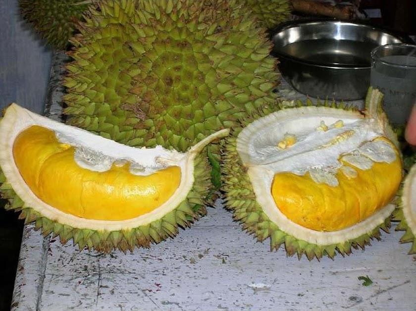 Bibit Tanaman Buah Durian Musang King Jawa Barat