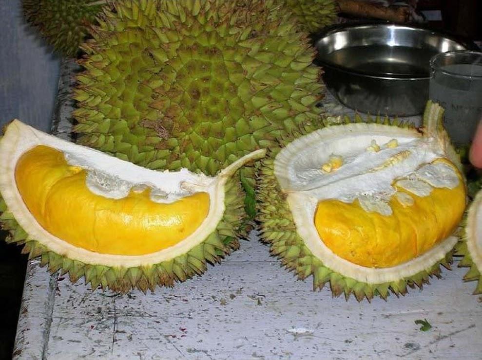 Bibit Tanaman Buah Durian Musang King Sulawesi Tenggara
