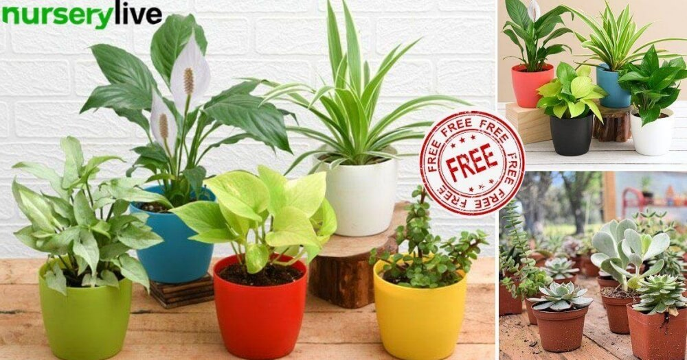 Free Indoor Plants Online refer and earn