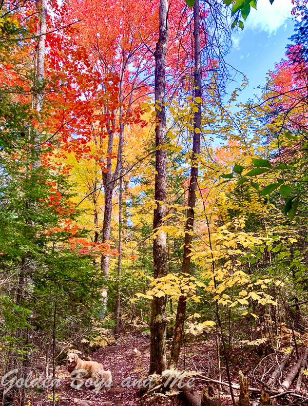 fall foliage in the Adirondack mountains - www.goldenboysandme.com