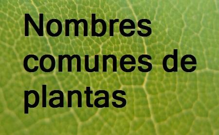 Nombres comunes de plantas