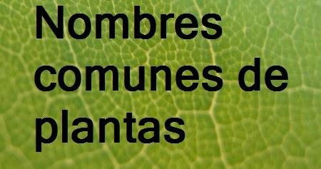 Nombres comunes de plantas plantas riomoros for Tipos de arbustos ornamentales