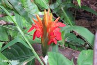 Red flower - Lyon Arboretum, Manoa Valley, Oahu, HI