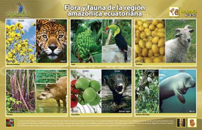 Resultado de imagen de fauna de Ecuador