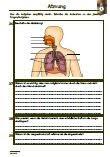 Atmung-Biologie-Lunge-Atemorgane-Lernzielkontrolle