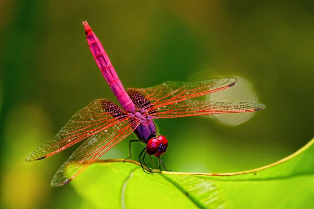 10 Admirably Beautiful Insects | Fun Animals Wiki, Videos ...