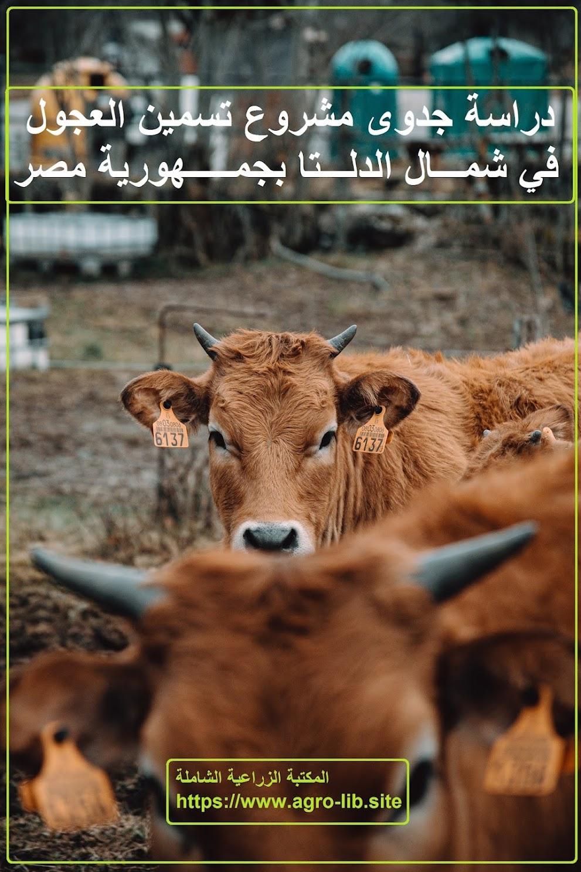 كتاب  : دراسة جدوى مشروع تسمين العجول في شمال الدلتا بجمهورية مصر