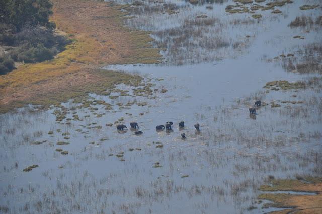avvistamento animali sul delta okavango
