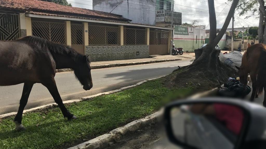 AMARGOSA: ANIMAIS SOLTOS NA AVENIDA ACM QUASE PROVOCA ACIDENTE