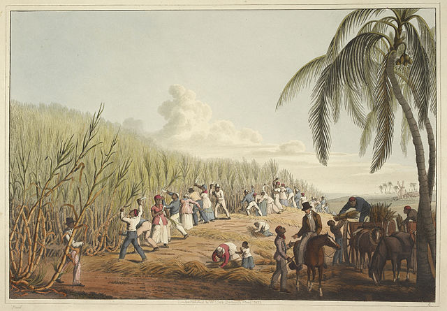 Sugarcane Plantation in the America
