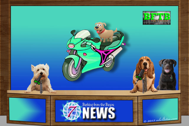 Barking from the Bayou News Team