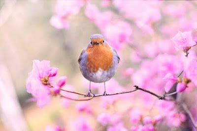 التعامل مع مشاكل الطيور