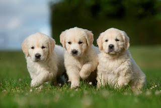 Como preparar o ambiente para a chegada do cão?