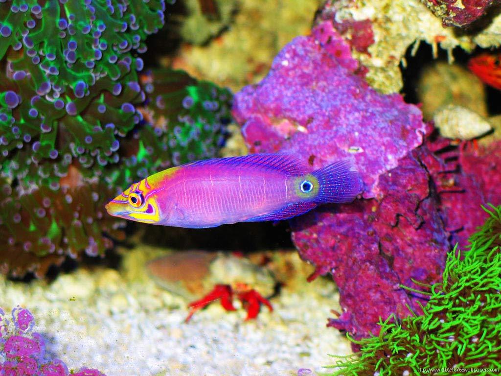 colorful fish - photo #9
