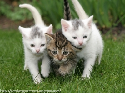 kittens cute kitten cats three funny animals animal cat fanpop running trio sweet