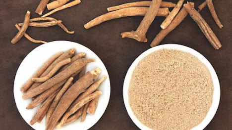 Rễ cây sâm Ấn Độ giúp cải thiện chất lượng tinh dịch