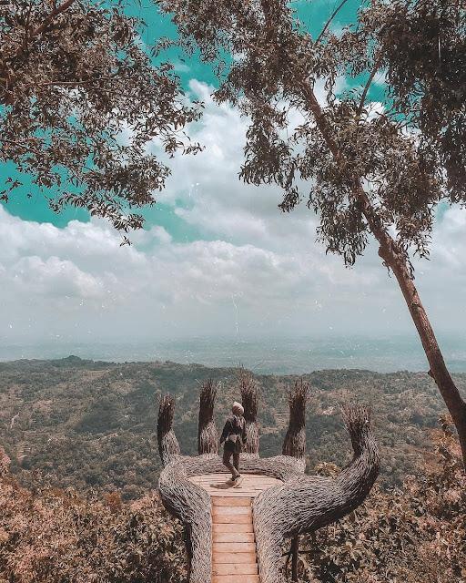 Pinus pengger Jogja
