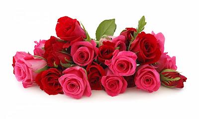love rose flower images