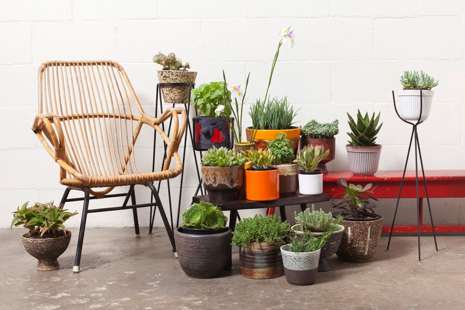 Organic Home Accessories: Cacti