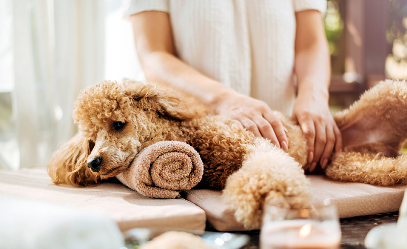 Try One of These Alternative Treatments for Your Pet's Holistic Health