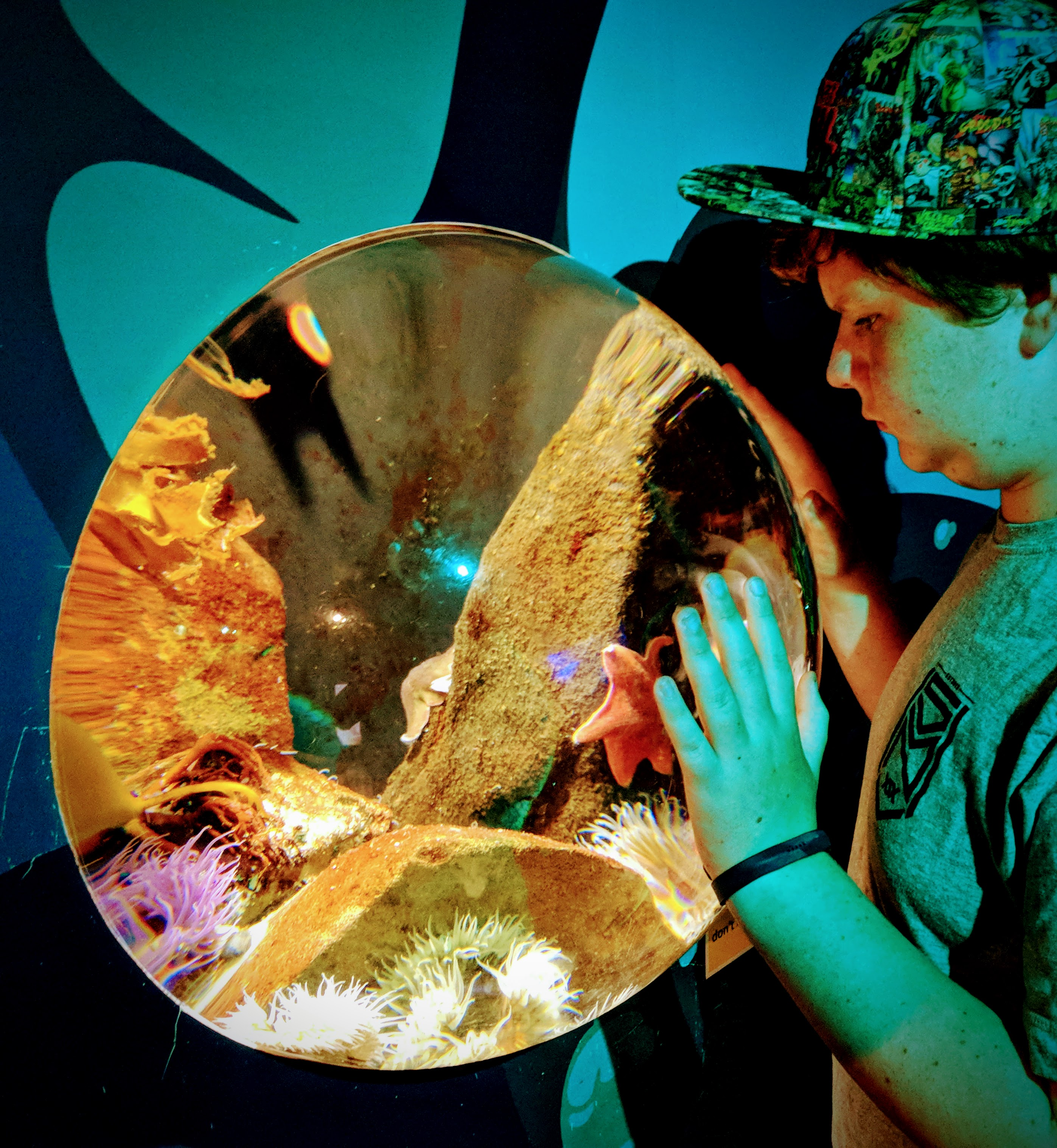 Convex aquarium window at Kelly Tarltons (Auckland, AoNZ)